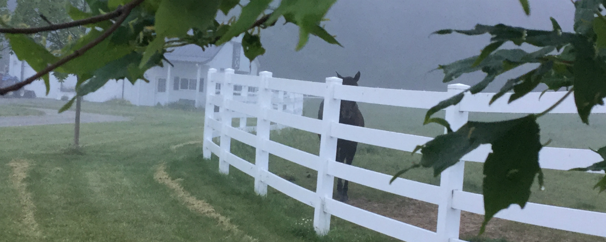 Solid fencing to keep horses safe